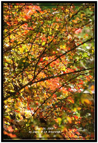 IMGP6551 frame.jpg