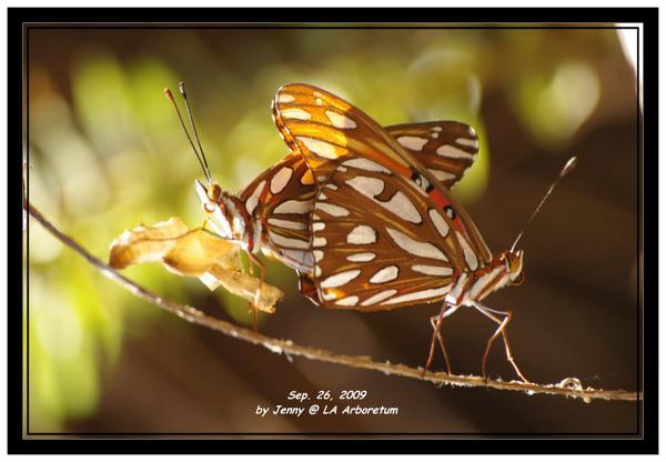 IMGP6583 frame.jpg