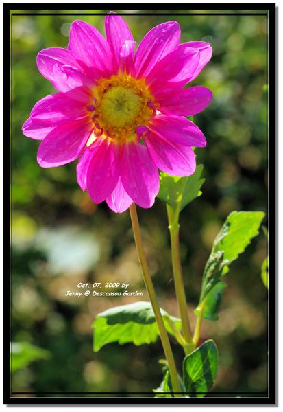 IMGP6830 frame.jpg