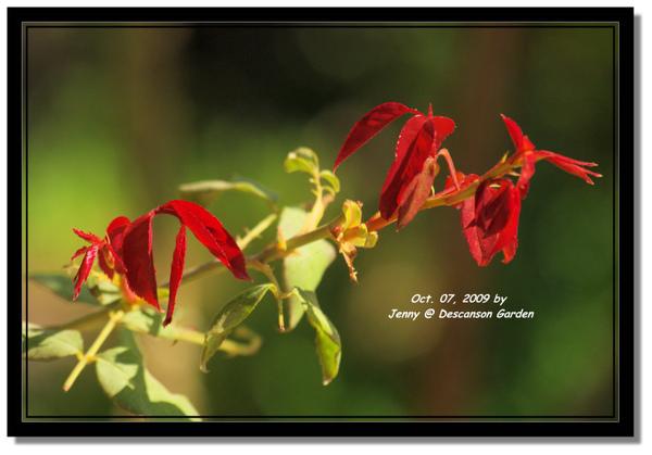 IMGP6833 frame.jpg