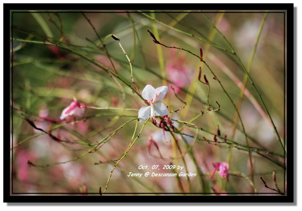 IMGP6845 frame.jpg