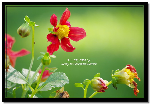 IMGP6851 frame.jpg