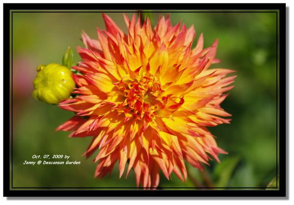 IMGP6859 frame.jpg