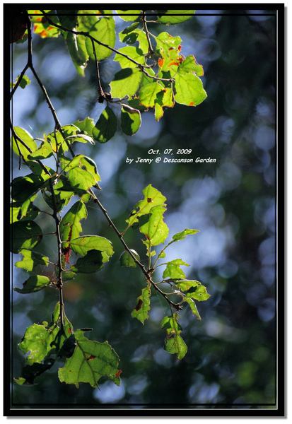 IMGP6908 frame.jpg