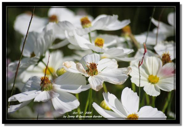 IMGP6923 frame.jpg