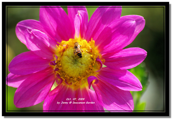 IMGP6925 frame.jpg