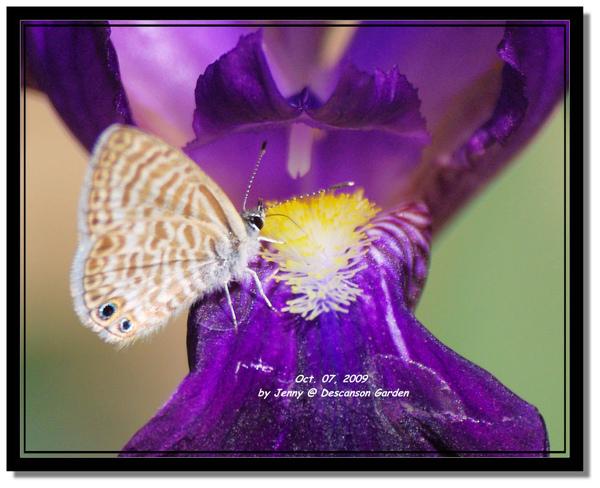 IMGP6937 frame.jpg