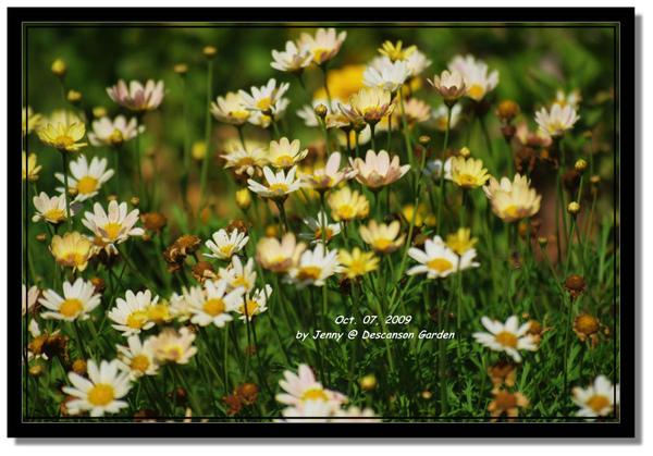 IMGP6973 frame.jpg