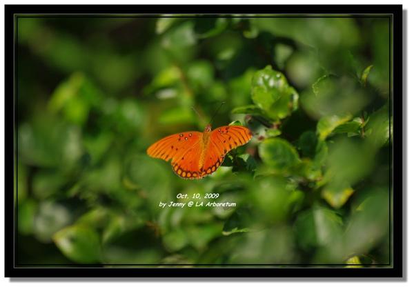 IMGP7108 frame.jpg