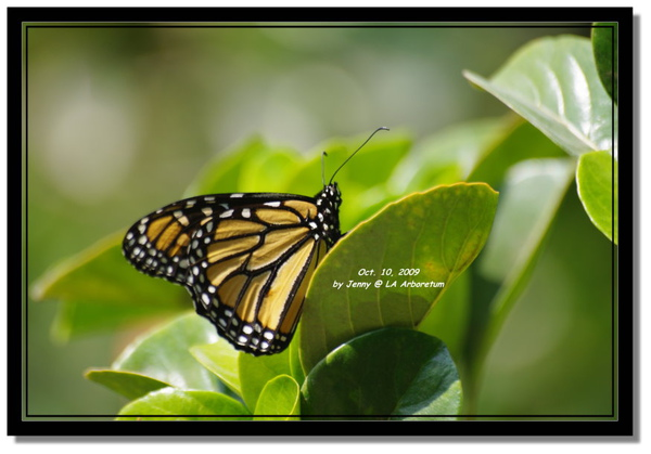 IMGP7141 frame.jpg