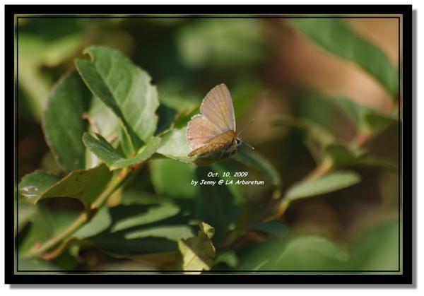 IMGP7158 frame.jpg