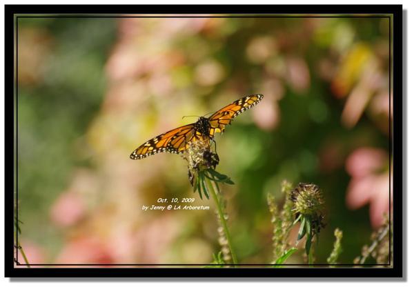 IMGP7214 frame.jpg