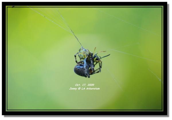 IMGP7329 frame.jpg