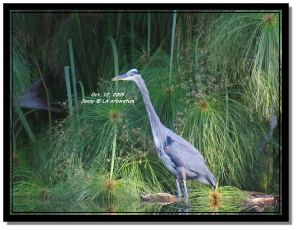 IMGP7362 frame.jpg