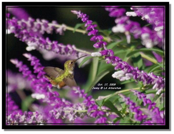 IMGP7378 frame.jpg