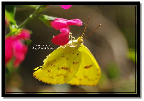 IMGP7417 frame.jpg