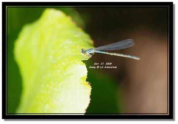 IMGP7428 frame.jpg
