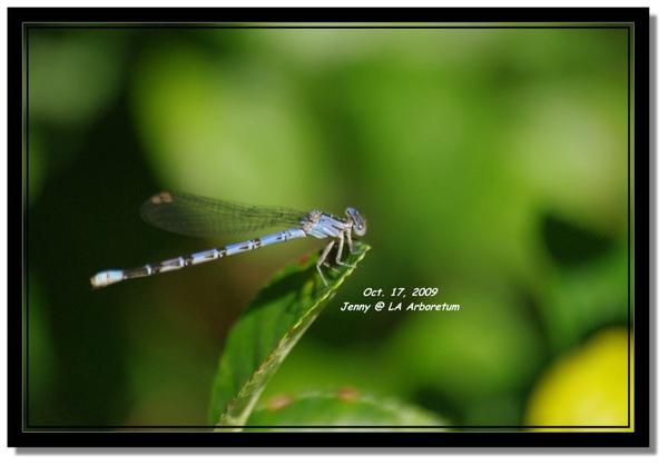 IMGP7462 frame.jpg