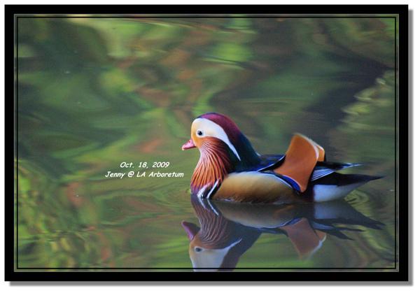 IMGP7486 frame.jpg