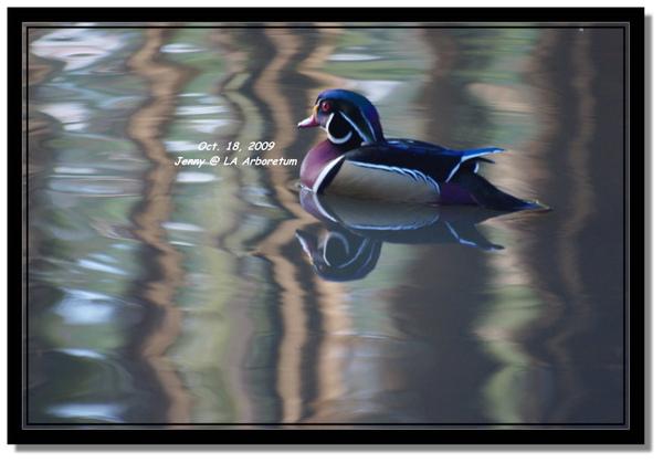 IMGP7491 frame.jpg