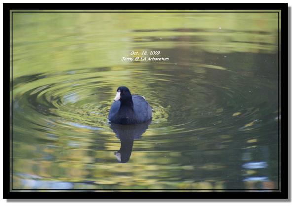 IMGP7510 frame.jpg