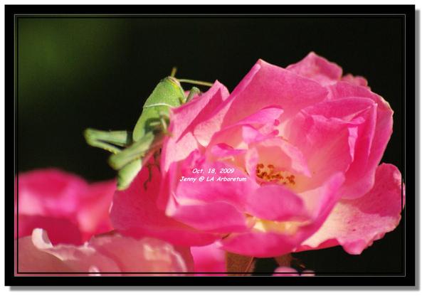 IMGP7553 frame.jpg