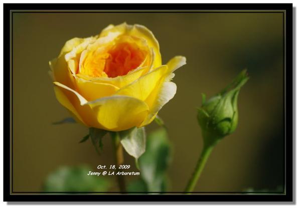 IMGP7567 frame.jpg