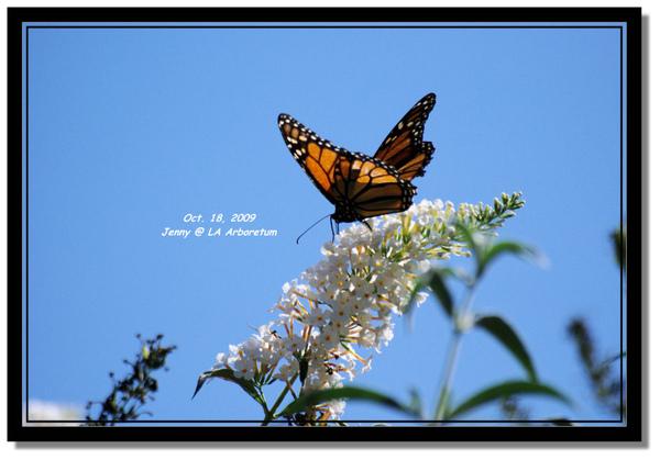 IMGP7580 frame.jpg