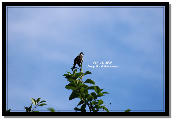 IMGP7583 frame.jpg