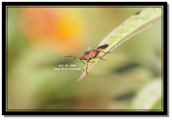 IMGP7645 frame.jpg