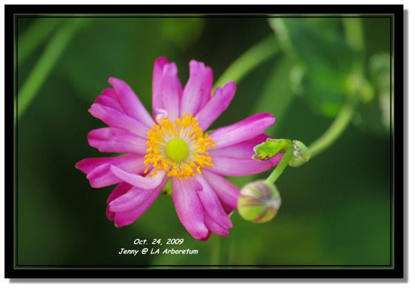 IMGP7660 frame.jpg