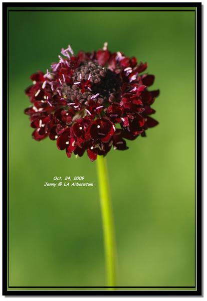 IMGP7687 frame.jpg