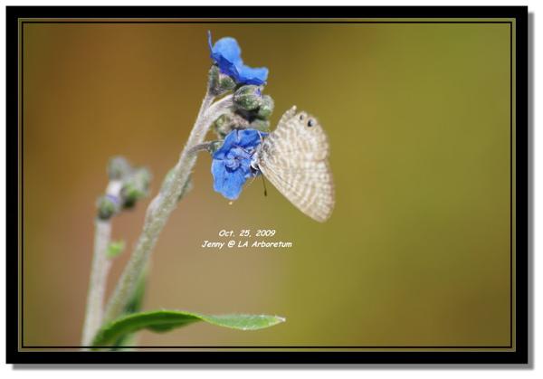 IMGP7801 frame.jpg