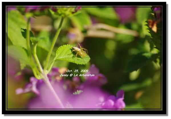 IMGP7825 frame.jpg
