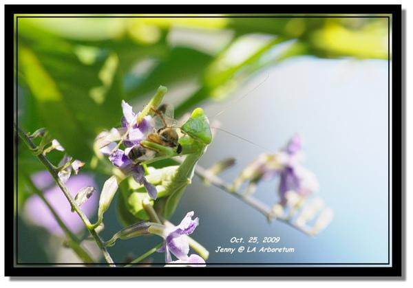 IMGP7839 frame.jpg
