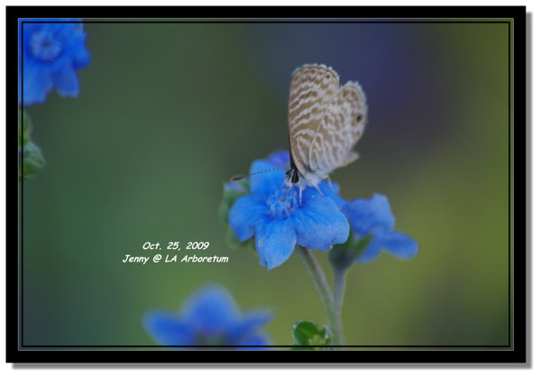 IMGP7887 frame.jpg