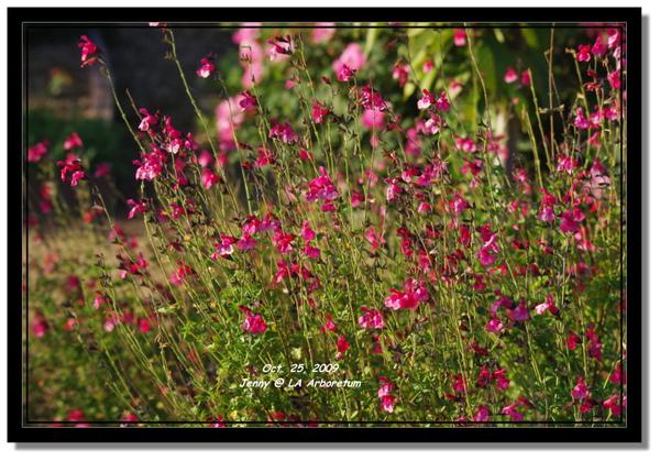 IMGP7899 frame.jpg
