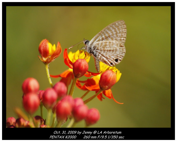 IMGP7989 frame.jpg