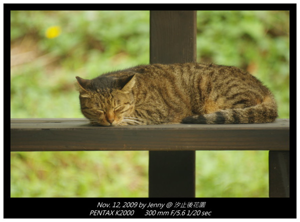 IMGP8183 frame.jpg