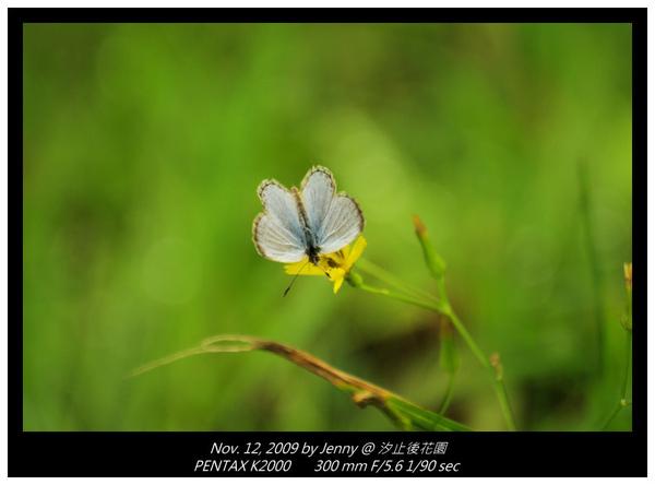 IMGP8229 frame.jpg
