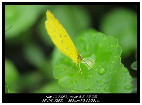 IMGP8306 frame.jpg