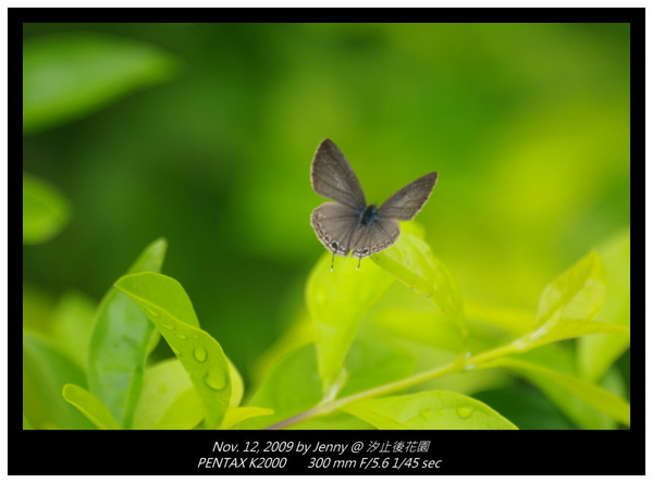 IMGP8318 frame.jpg