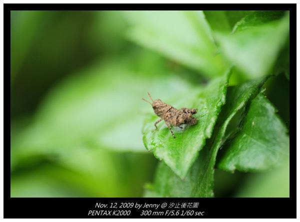 IMGP8335 frame.jpg