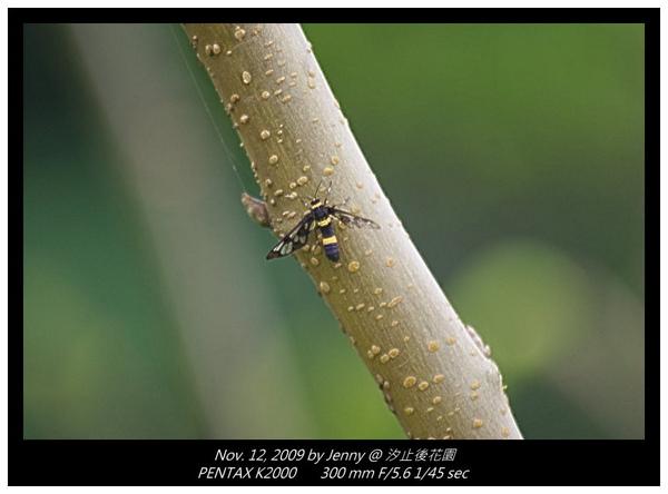 IMGP8337 frame.jpg