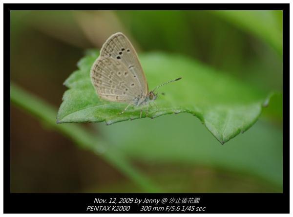 IMGP8364 frame.jpg