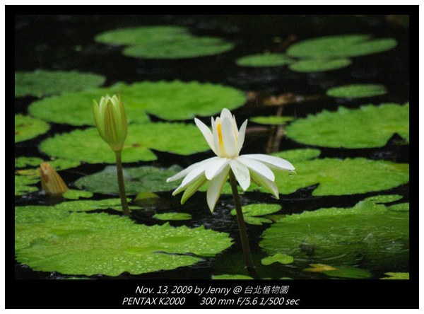 IMGP8390 frame.jpg