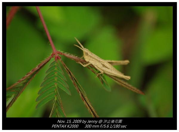 IMGP8434 frame.jpg