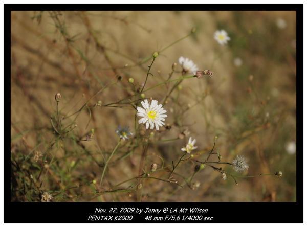 IMGP8581 frame.jpg