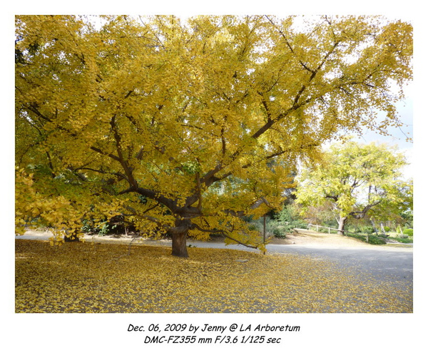 P1020118 frame.jpg