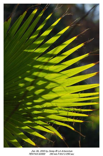 IMGP8705 frame.jpg
